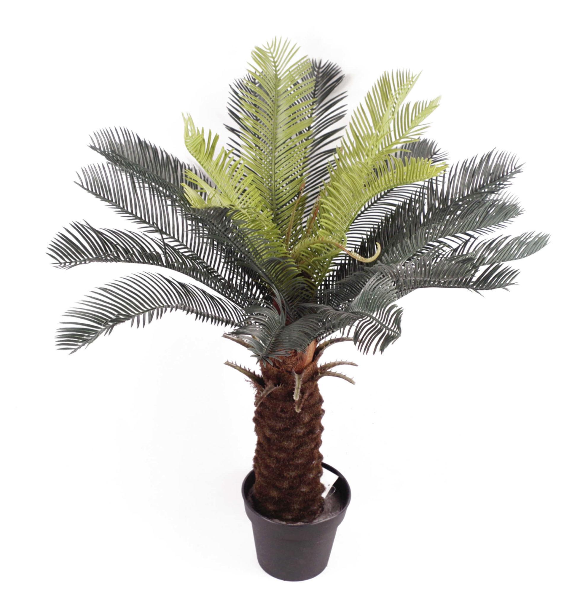 Artificial Cycas Tree
