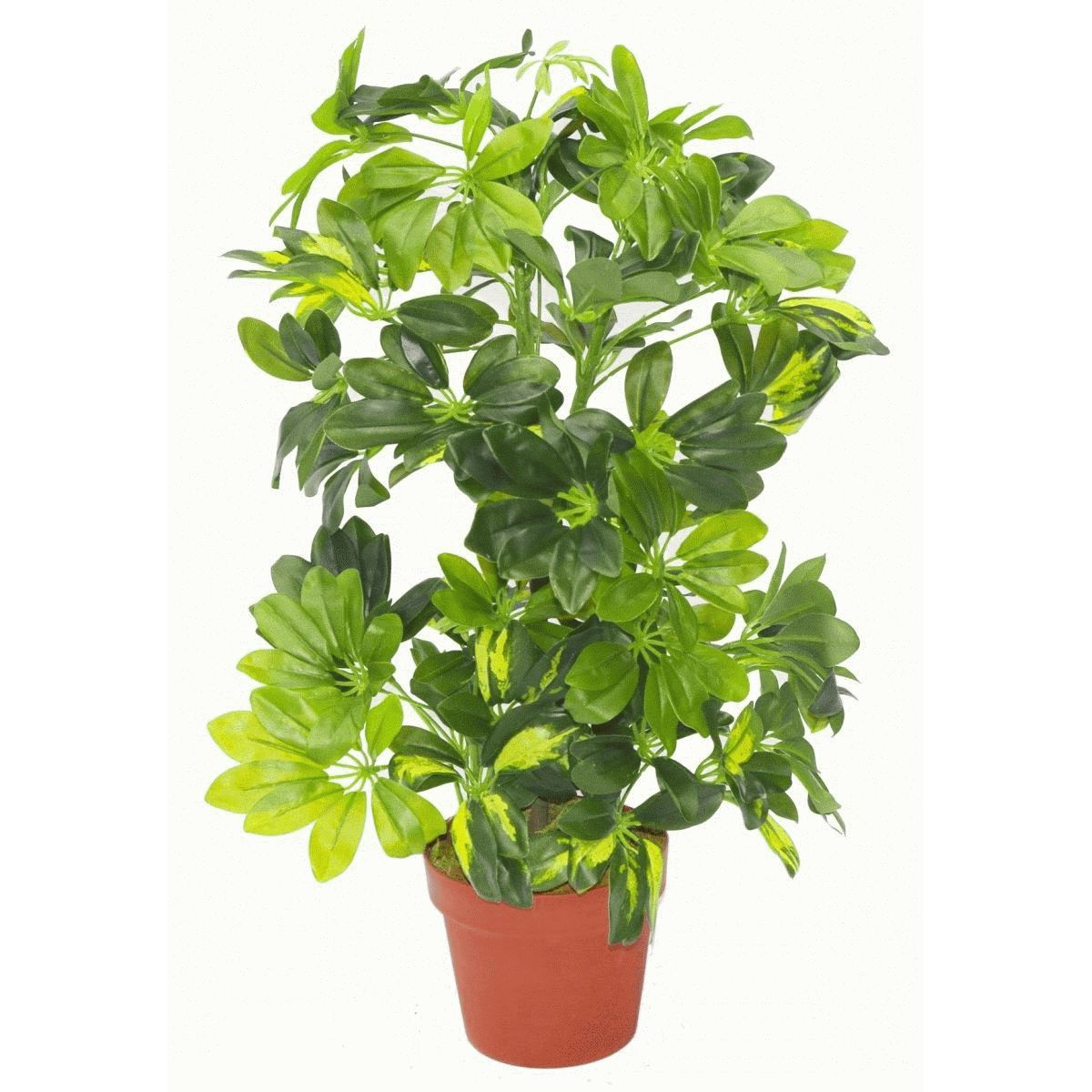 "Umbrella Plant Toxic: 65cm Artificial Schefflera Arboricola Plant ""Umbrella Tree"