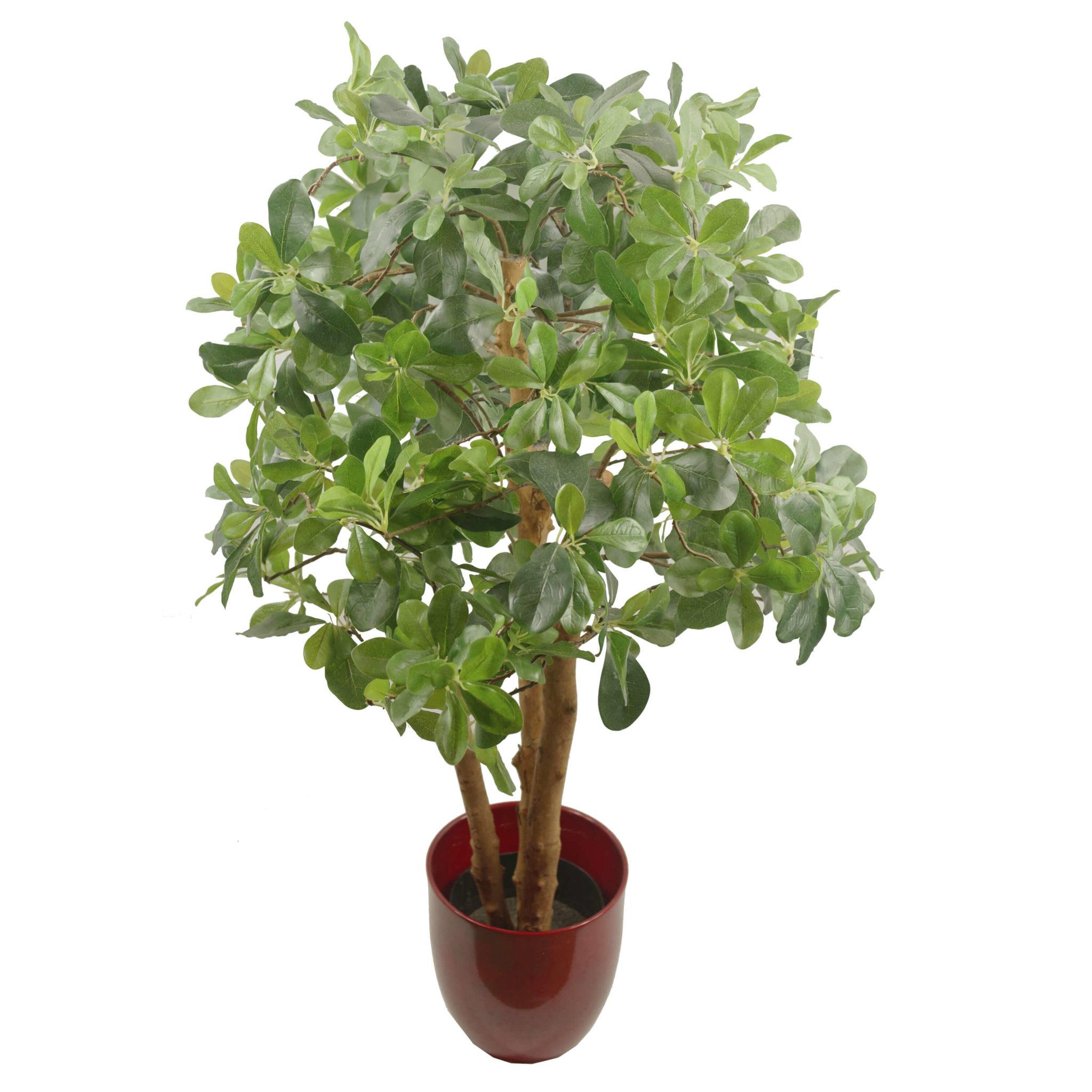 Arboricola Trees