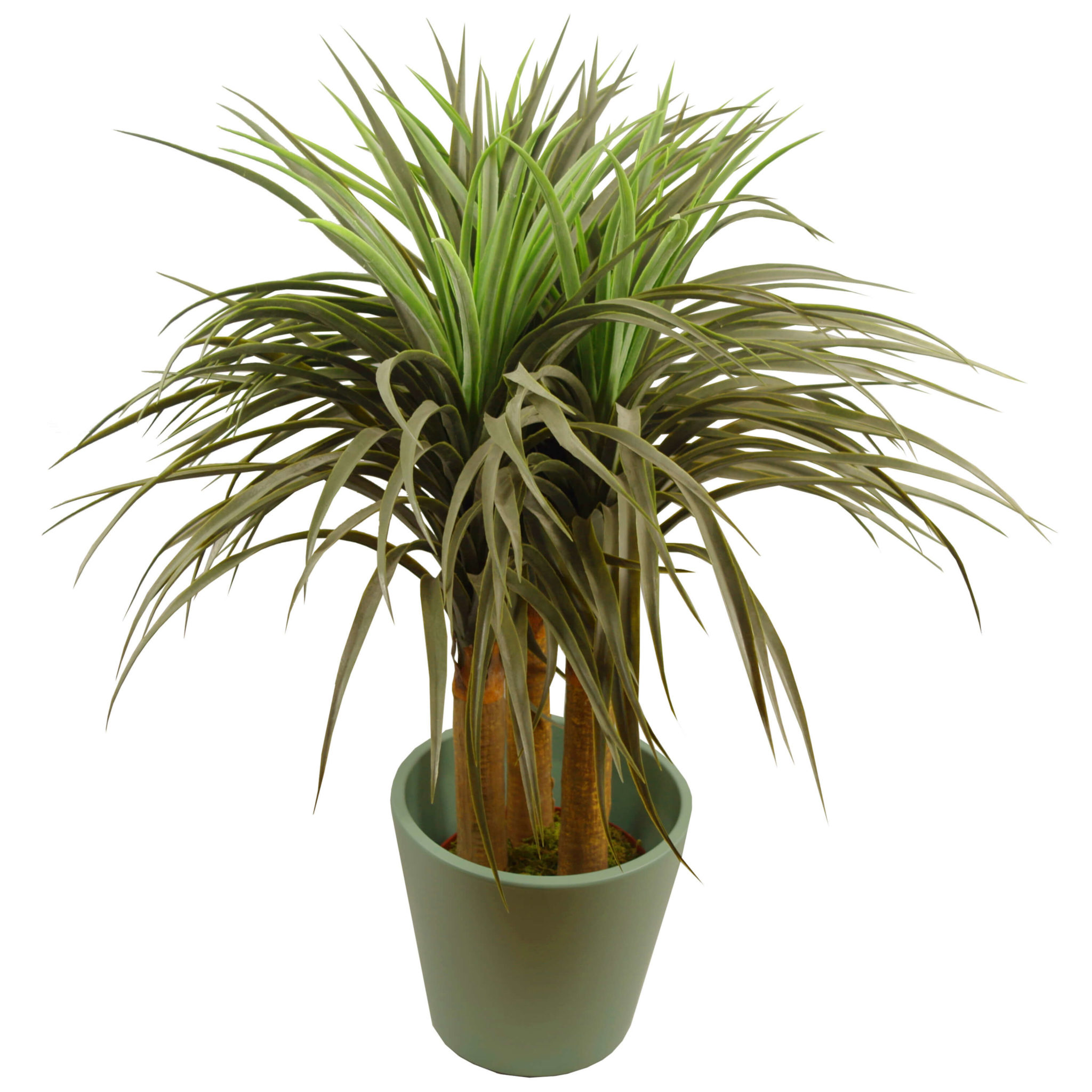 Artificial Ponytail Palm