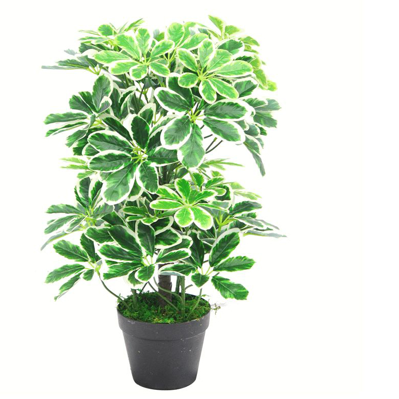 Umbrella Plant Toxic: 60cm Artificial Schefflera Arboricola Plant Umbrella Tree