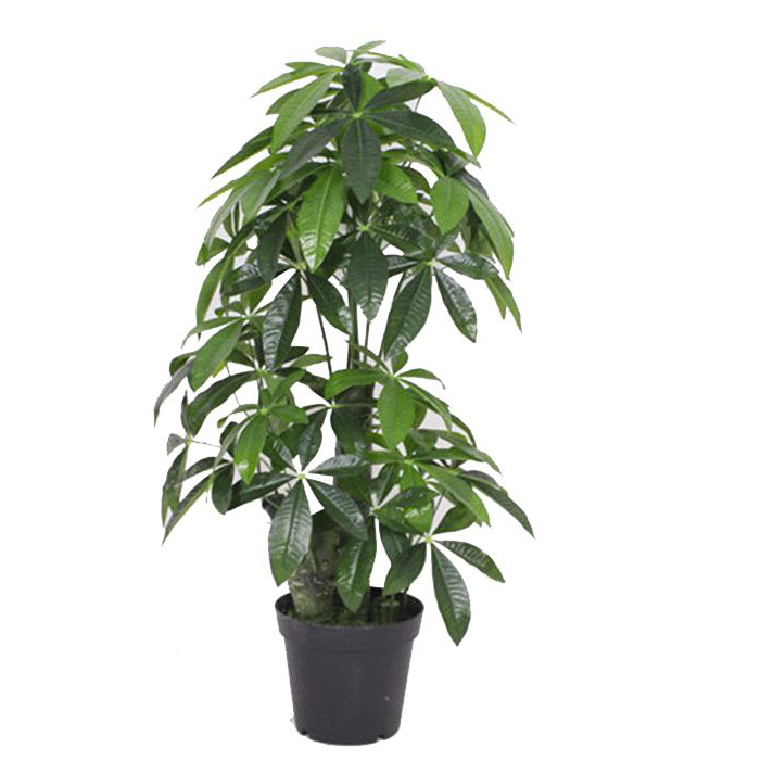 Cm artificial money tree plant evergreen extra large