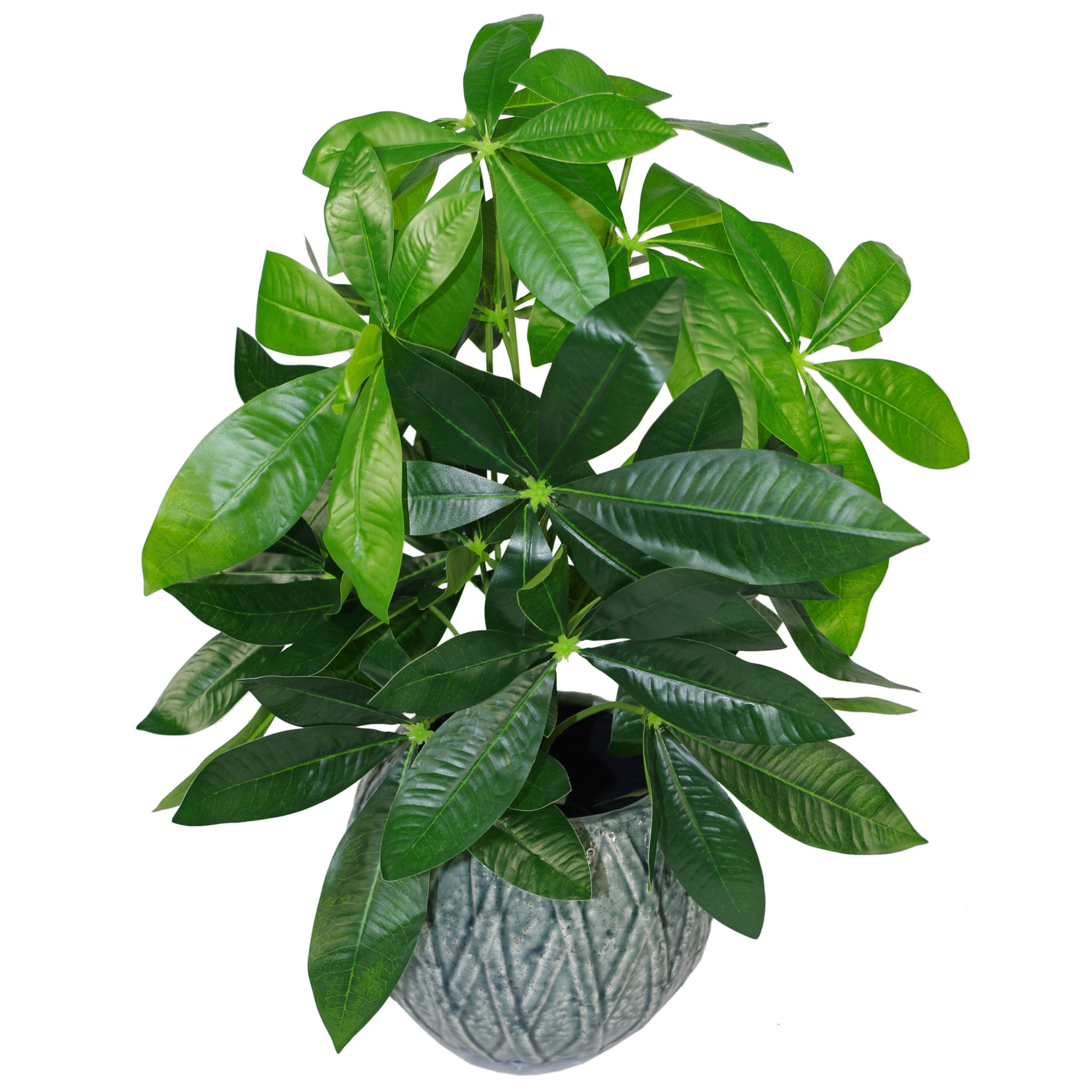 Cm artificial money tree plant medium